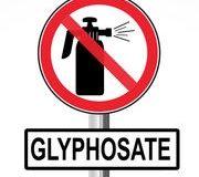 Le glyphosate